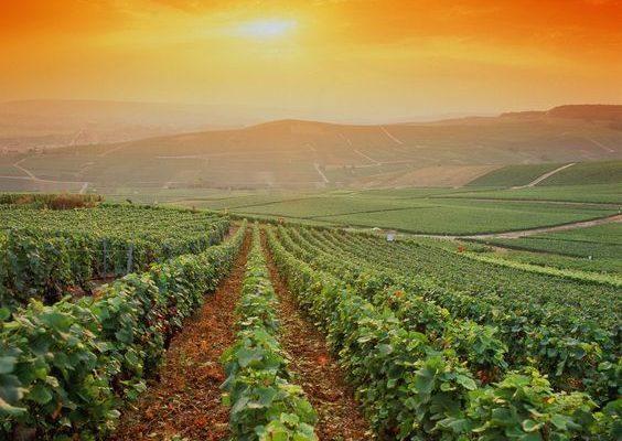 Les spécialités de la région Champagne Ardenne