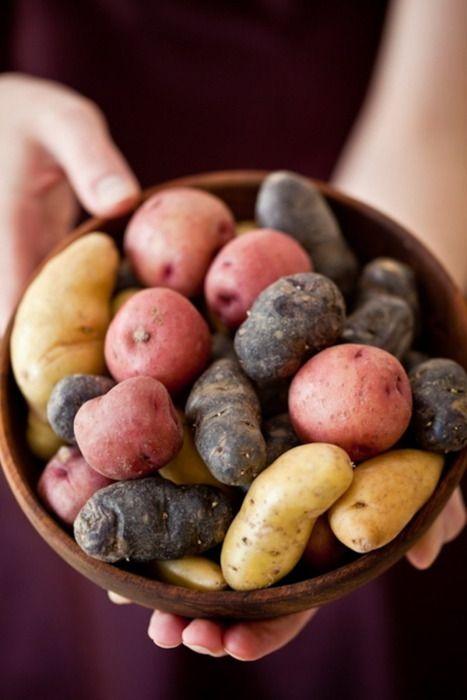 Comment utiliser les diff rentes vari t s de pommes de - Comment cuisiner les pommes de terre de noirmoutier ...